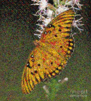 Fritillary Butterfly Mosaic Art Print by Scott Camazine
