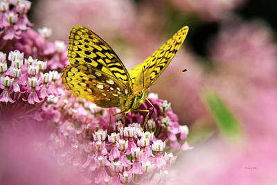 Photograph - Fritillary Butterfly On Flowers by Christina Rollo