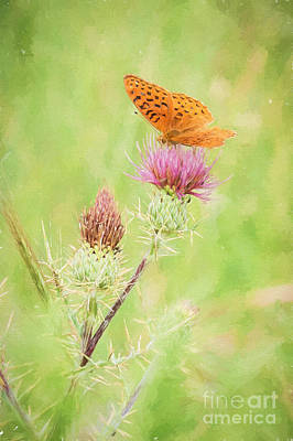 Photograph - Fritillary Butterfly On Thistle by Marianne Jensen