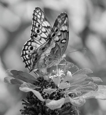 Photograph - Fritillary Butterfly by Phyllis Peterson