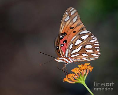 Photograph - Fritillary IIi by David Waldrop