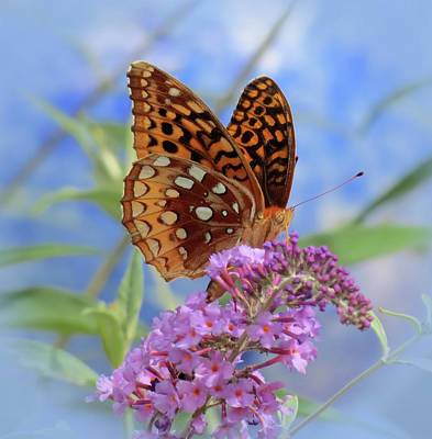 Photograph - Fritillary On Blue by MTBobbins Photography