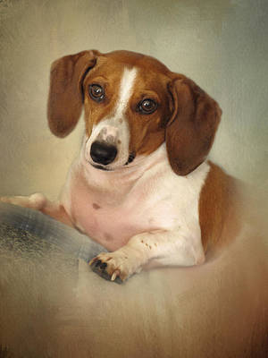 Photograph - Fritz The Dachshund by David and Carol Kelly
