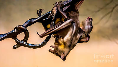 Photograph - Friut Bats Mingle by Em Witherspoon