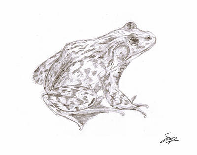 Drawing - Frog 2 by Steven Powers SMP