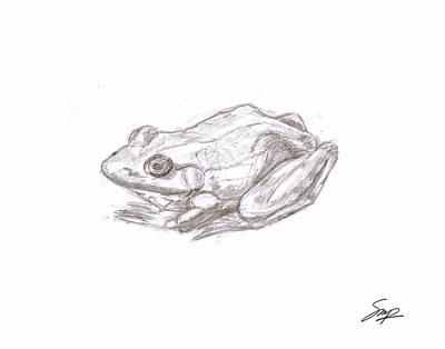 Drawing - Frog 4 by Steven Powers SMP