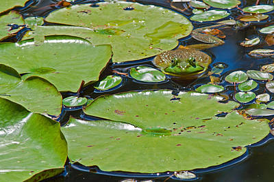 Photograph - Frog Amongst The Lilypads by David Freuthal