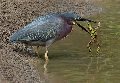 Photograph - Frog And Beak by Art Cole