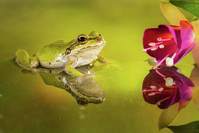 Photograph - Frog And Fuchsia With Reflections by William Lee