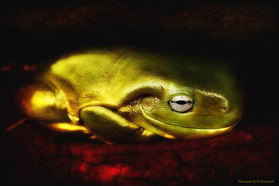 Photograph - Frog Art 01 by Kevin Chippindall