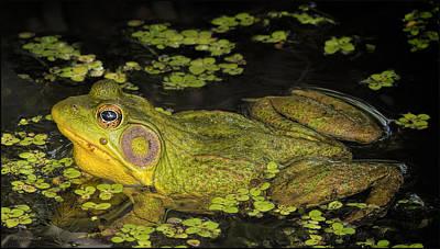 Mammals Photograph - Frog At Bear Creek Nature Park  by LeeAnn McLaneGoetz McLaneGoetzStudioLLCcom