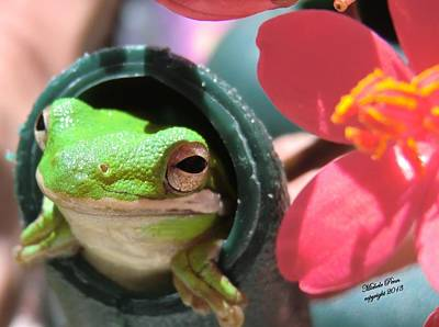 Frog At Selby Art Print by Michele Penn