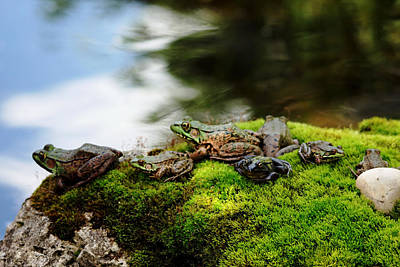 Photograph - Frog Convention by Debbie Oppermann