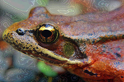 Photograph - Frog Eye by Adria Trail