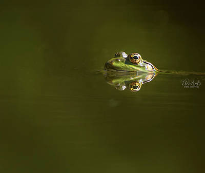 Photograph - Frog Eyes Reflection by Elenarts - Elena Duvernay photo
