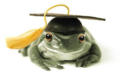 Photograph - Frog Graduate by Darwin Wiggett
