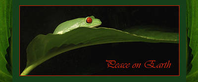 Photograph - Frog Holiday Card And Mug by Nancy Griswold