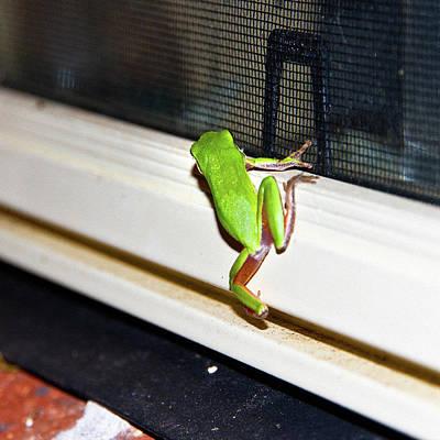 Photograph - Frog Hop In To My Window by Miroslava Jurcik