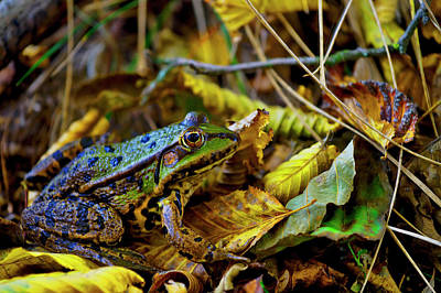 Photograph - Frog by Ivan Slosar