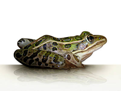 Digital Art - Frog by James Larkin