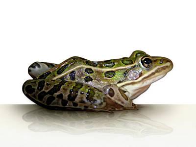 Digital Art - Frog by James Larkin