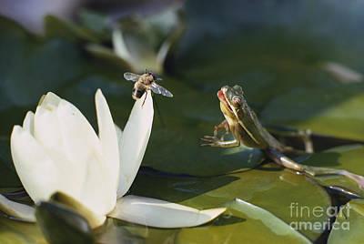 Frog Jumping At Prey Art Print by A. Cosmos Blank