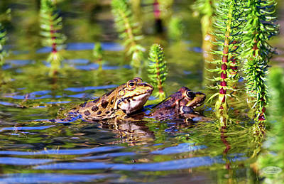 Photograph - Frog Mating In A Pond by Elenarts - Elena Duvernay photo