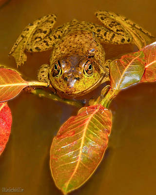 Photograph - Frog Nature Wear by LeeAnn McLaneGoetz McLaneGoetzStudioLLCcom