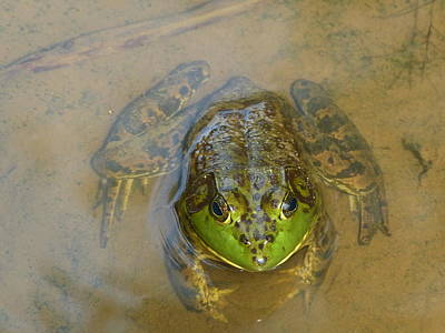 Art Print featuring the photograph Frog Of Lake Redman by Donald C Morgan