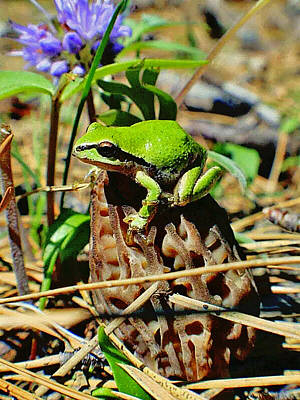 Photograph - Frog On A Morel by Cheri Johnson Bob Johnson