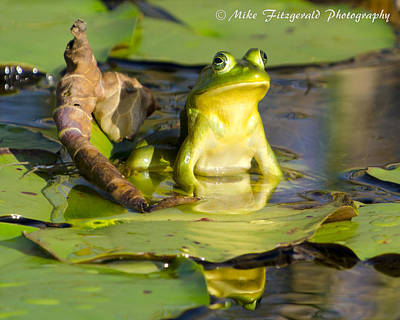 Photograph - Frog On A Throne by Mike Fitzgerald