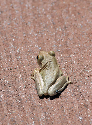 Photograph - Frog On Deck by William Tasker