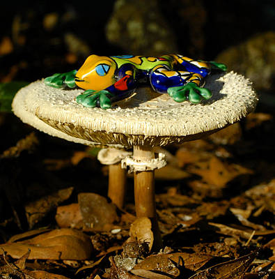 Photograph - Frog On Mushrooms by David Lee Thompson