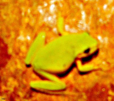 Frog On The Wall Art Print by Debra     Vatalaro