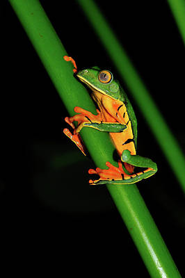 Photograph - Frog Pole Vault  by Harry Spitz