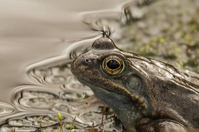 Photograph - Frog Portrait by Wendy Cooper