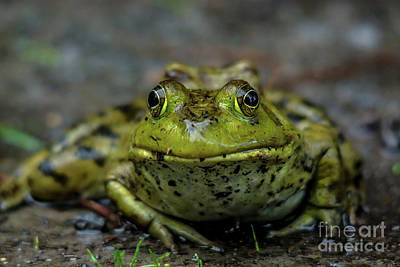 Photograph - Frog Prince by Cheryl Baxter