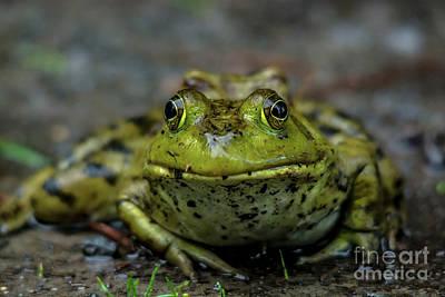 Photograph - Frog Prince by Cheryl Baxter