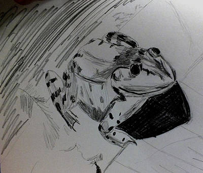 Drawing - Frog Sketch by Kimmary MacLean