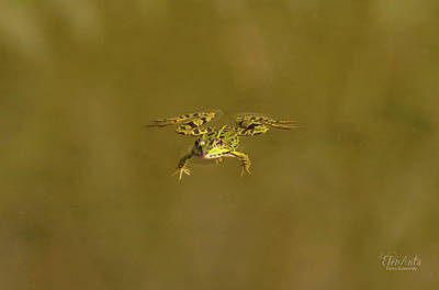 Photograph - Frog Swimming Alone by Elenarts - Elena Duvernay photo