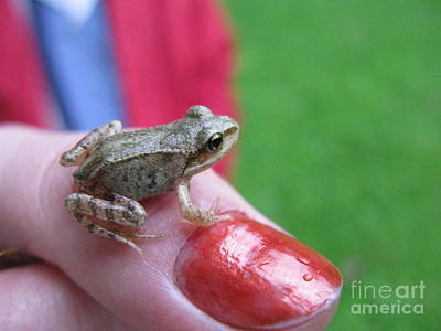 Photograph - Frog The Prince by Ausra Huntington nee Paulauskaite