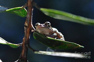 Frog With Twinkle In Eye Print by Wayne Nielsen