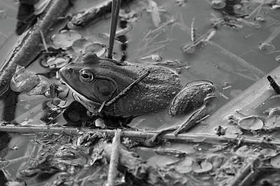 Photograph - The Frog Remains by Jenny Regan