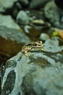Photograph - Froggy by Brynn Ditsche