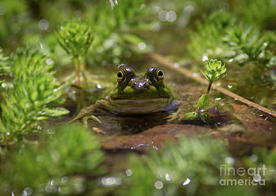 Art Print featuring the photograph Froggy by Douglas Stucky
