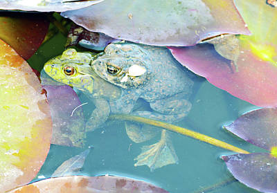 Photograph - Froggy Lovin by Brent Dolliver