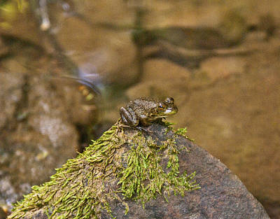 Photograph - Froggy On A Hill by Douglas Barnett