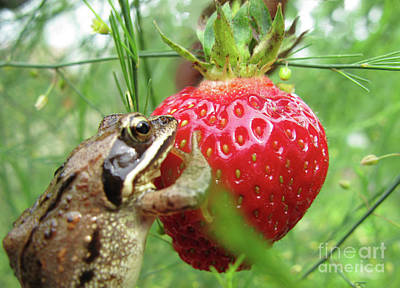 Photograph - Frogs Love Strawberries Too  by Ausra Huntington nee Paulauskaite