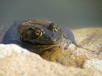 Photograph - Frogzilla by MTBobbins Photography
