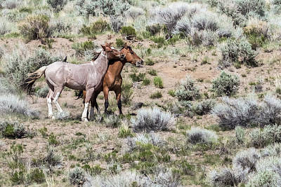 Photograph - Frolic For Two, No. 6 by Belinda Greb
